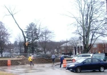 Wind Brings Down Tree